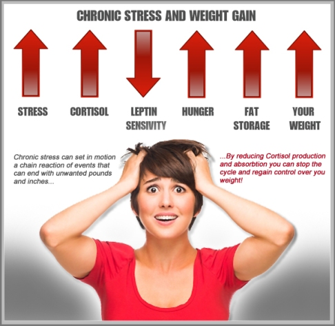 CORTISOL AND WEIGHT GAIN – FITNESS AND NUTRITION
